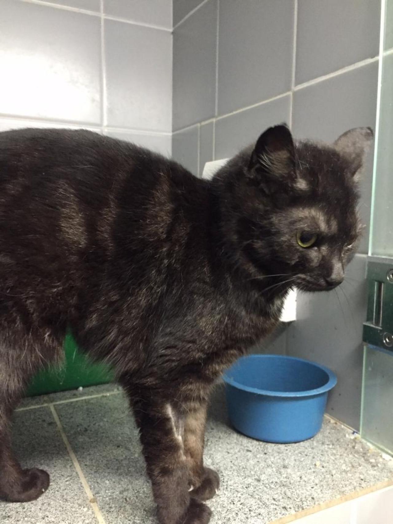 Zdjęcie główne #8 - Czarna koteczka znaleziona na ulicach Rawy